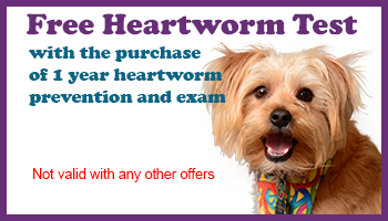 Free Heartworm Test