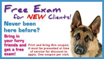 New Client Free Exam