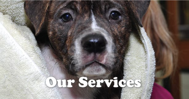 Veterinary services in Plainfield IL