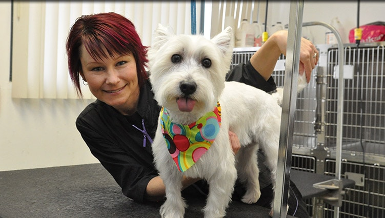 Dog groomer in Plainfield IL