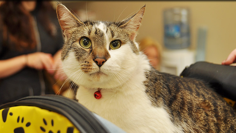 Kitten Veterinary Care at Plainfield Veterinary Clinic and Surgical Center